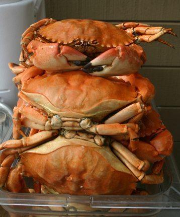 pacific-shellfish2-2