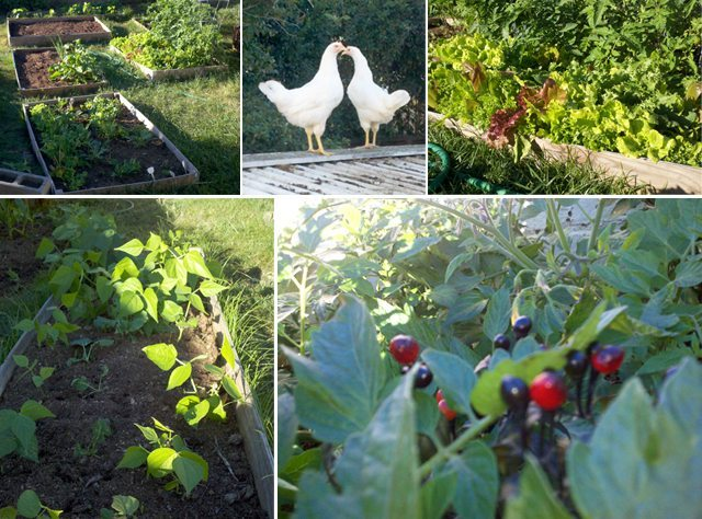 eco-caters-farm_1-2