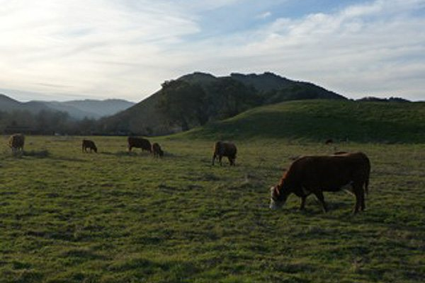 ranch_description_img