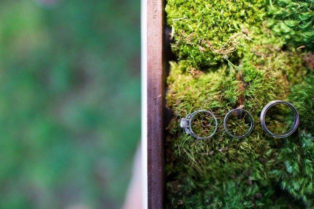 SD wedding South Coast Botanic Garden wedding San Diego best catering san diego wedding caterer organic catering best wedding fun wedding best california catering SD Library wedding - 2 of 13