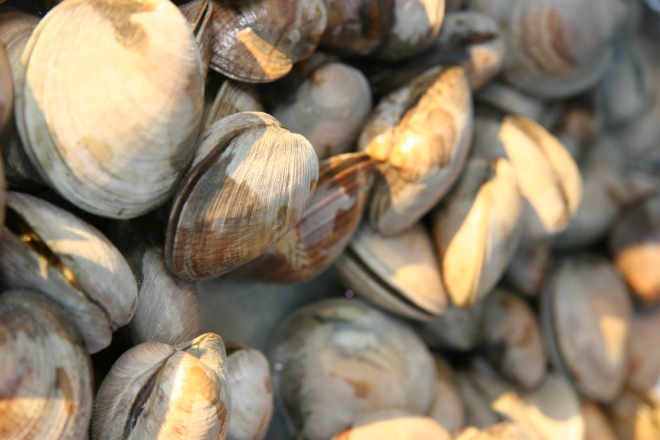 Clams-1-thegem-gallery-masonry catering san diego wedding catering