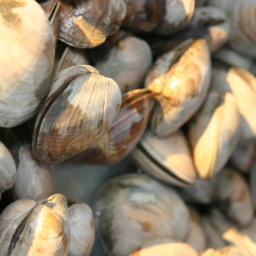Clams-256x256 catering san diego wedding catering